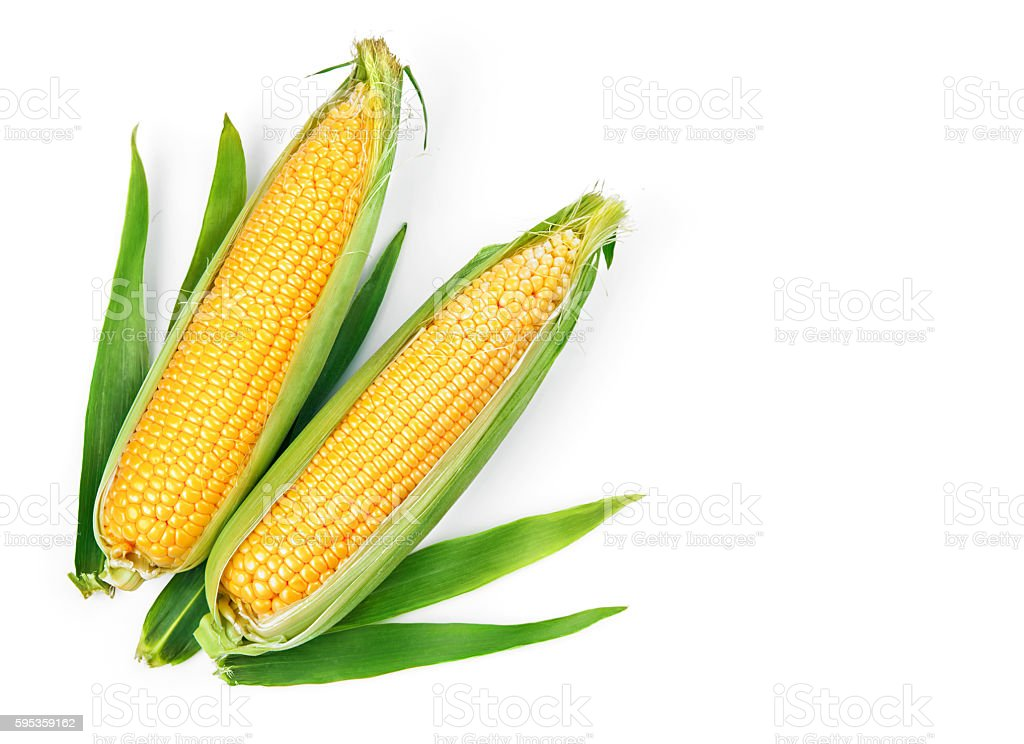 Corn corncob with green leaves ripe vegetables stock photo