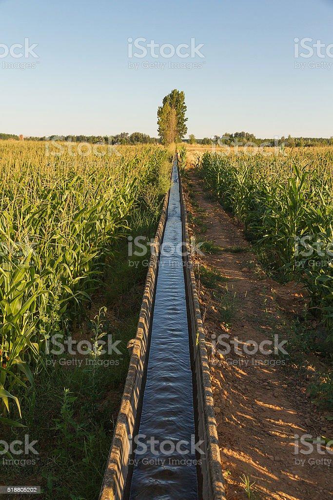 Corn Crop Irrigation - Riego en Cultivos de Maiz stock photo