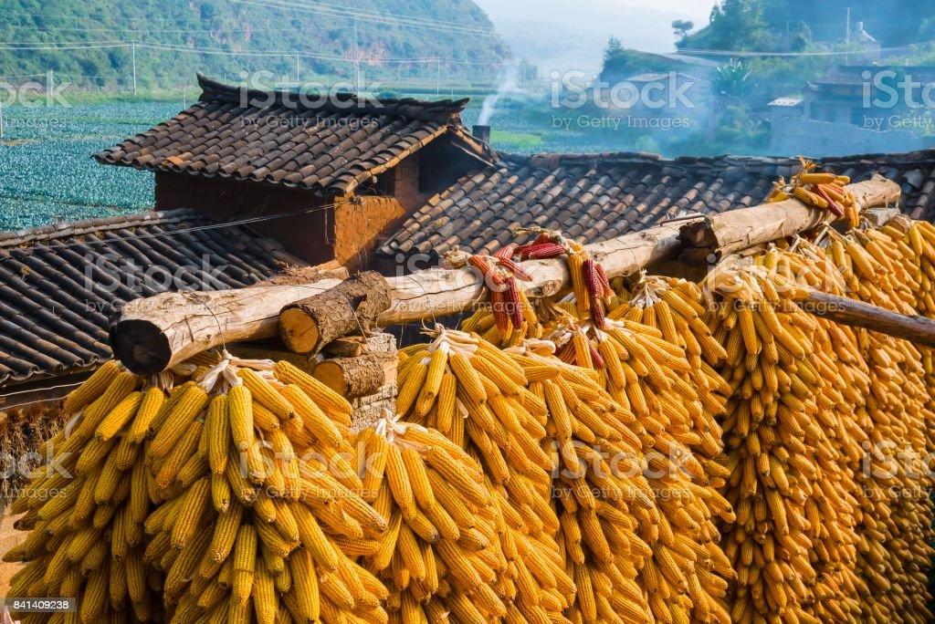Corn drying on farm in China stock photo
