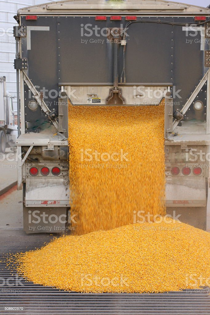 Corn Dumping Out of Iowa Truck stock photo