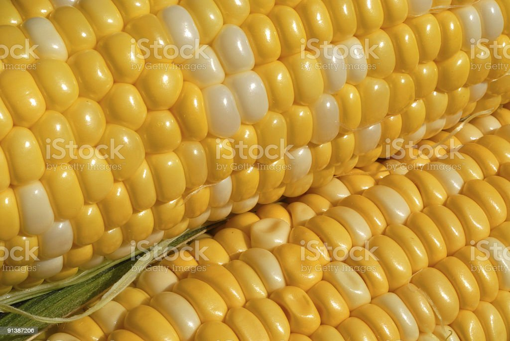 Corn Ears I royalty-free stock photo