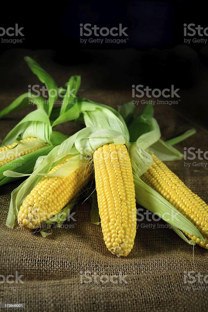 corn ears on burlap stock photo