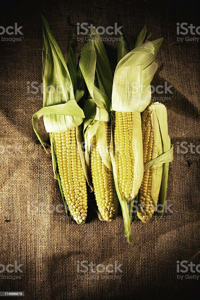 corn ears on burlap royalty-free stock photo