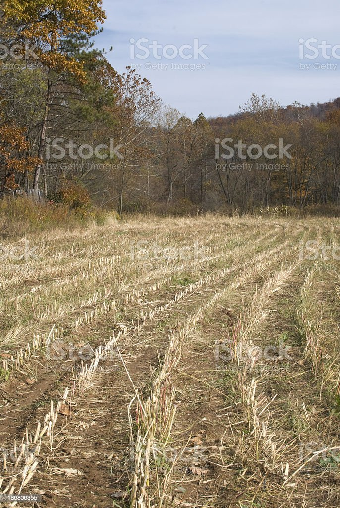 Corn Field after Harvest, Fall Agriculture, October royalty-free stock photo