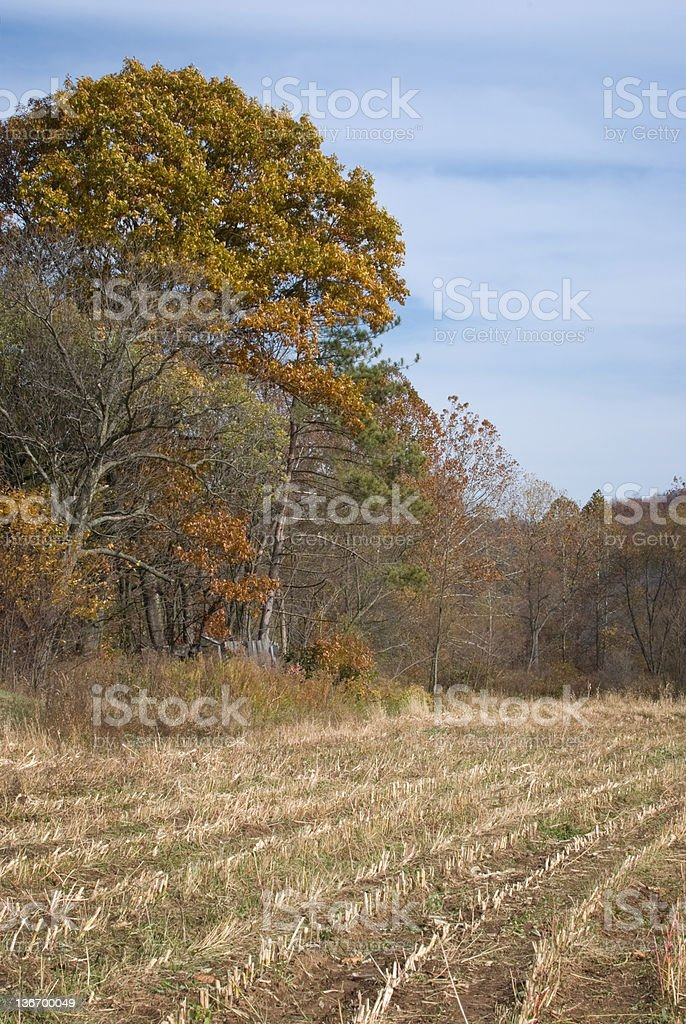 Corn Field after Harvest, Fall Agriculture royalty-free stock photo