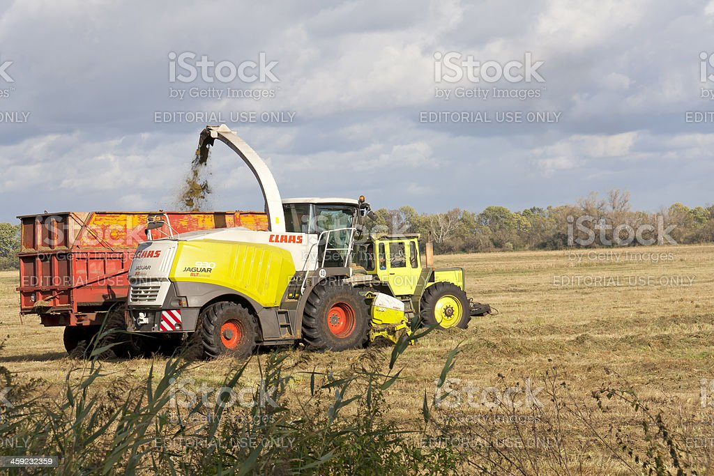 Corn field during harvest royalty-free stock photo