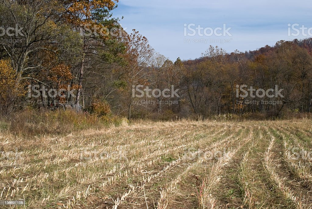 Corn Field Rows Recently Harvested in October, Pennsylvania royalty-free stock photo