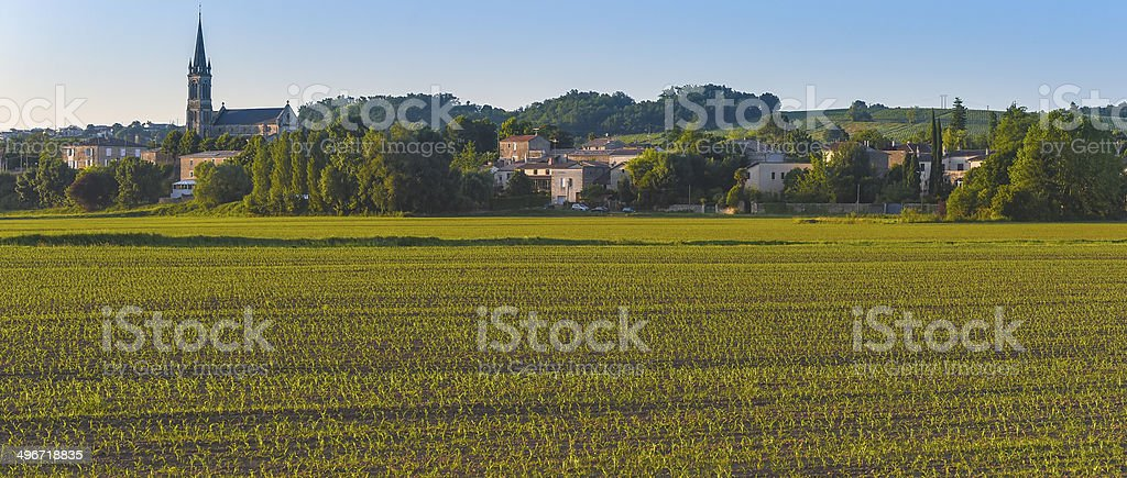 Corn Field-French Countryside royalty-free stock photo