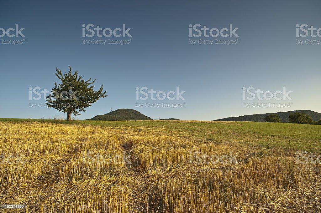 Corn Fild after Harvest stock photo