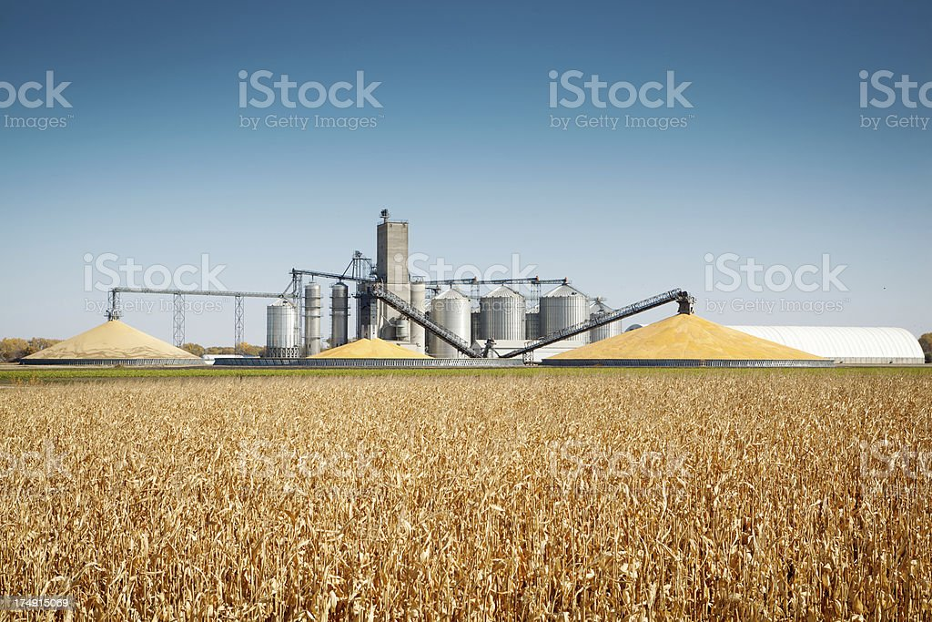 Corn Harvest and Processing Silos by Autumn Agricultural Farm Field stock photo