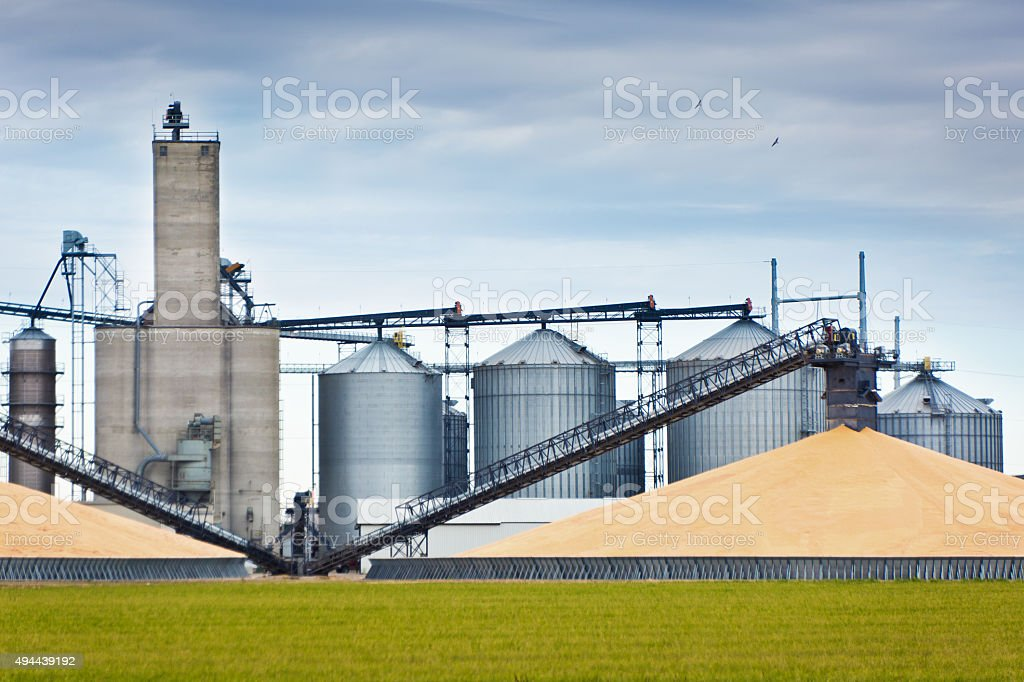 Corn Harvest and Processing Silos in Autumn stock photo