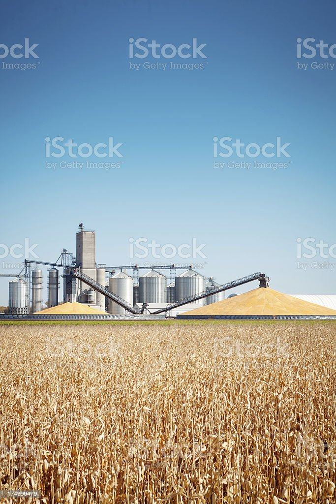 Corn Harvest and Processing Silos in Autumn Vt stock photo