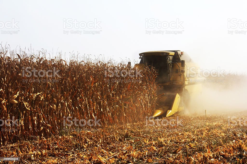 Corn harvest with combine harvester stock photo