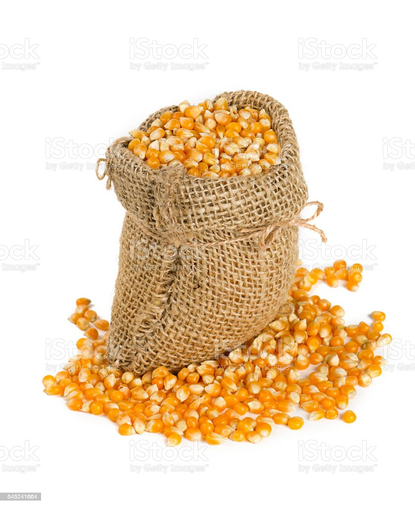 corn in burlap bag isolated on white stock photo