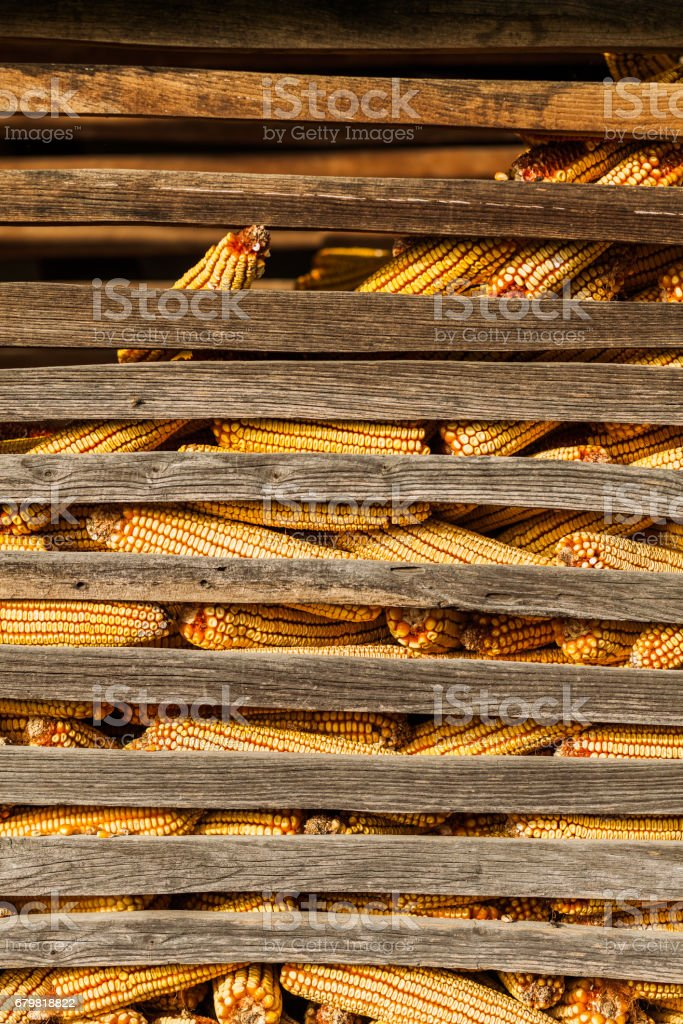 Corn in the barn stock photo