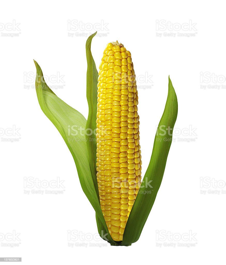 corn isolated on white background royalty-free stock photo