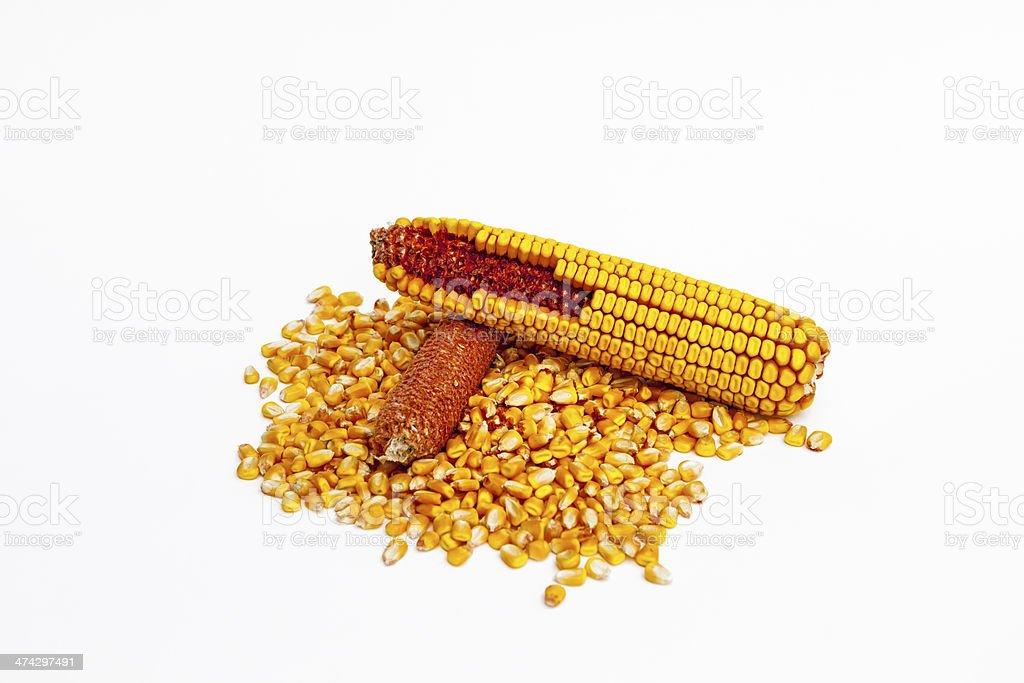 Corn kernels and cob on white stock photo