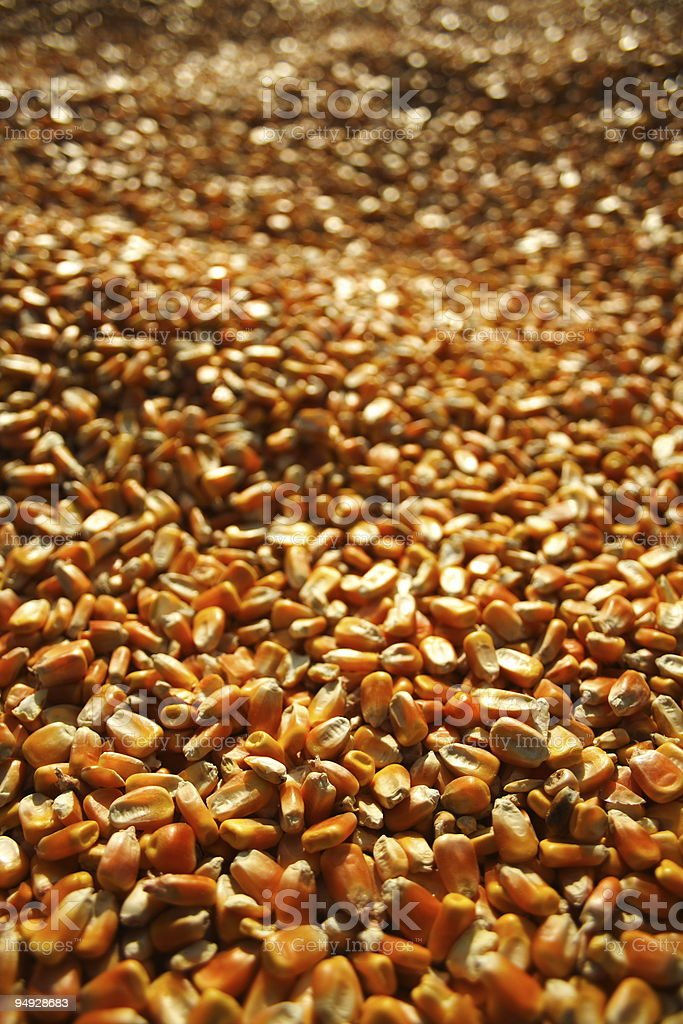 Corn Kernels royalty-free stock photo