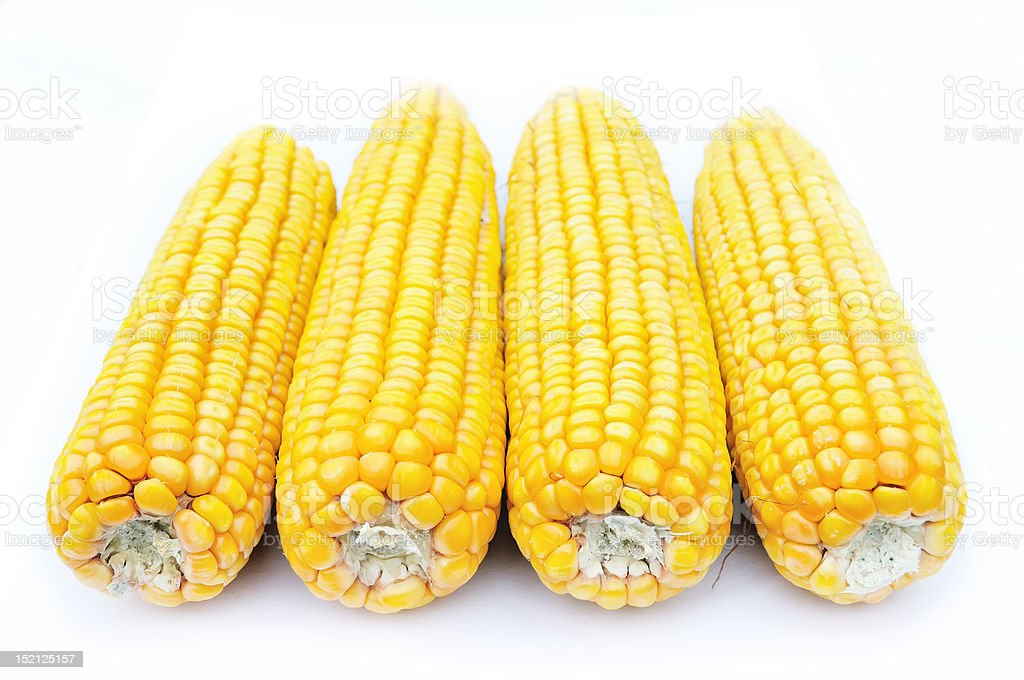 corn of maize stock photo