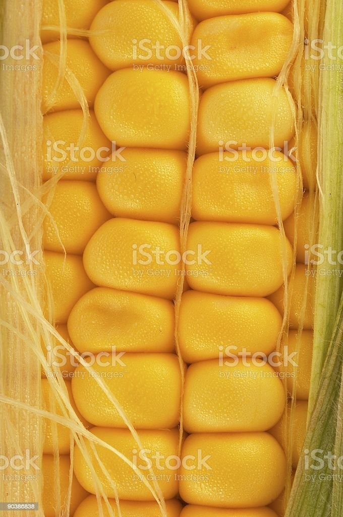 Corn on cob closeup royalty-free stock photo