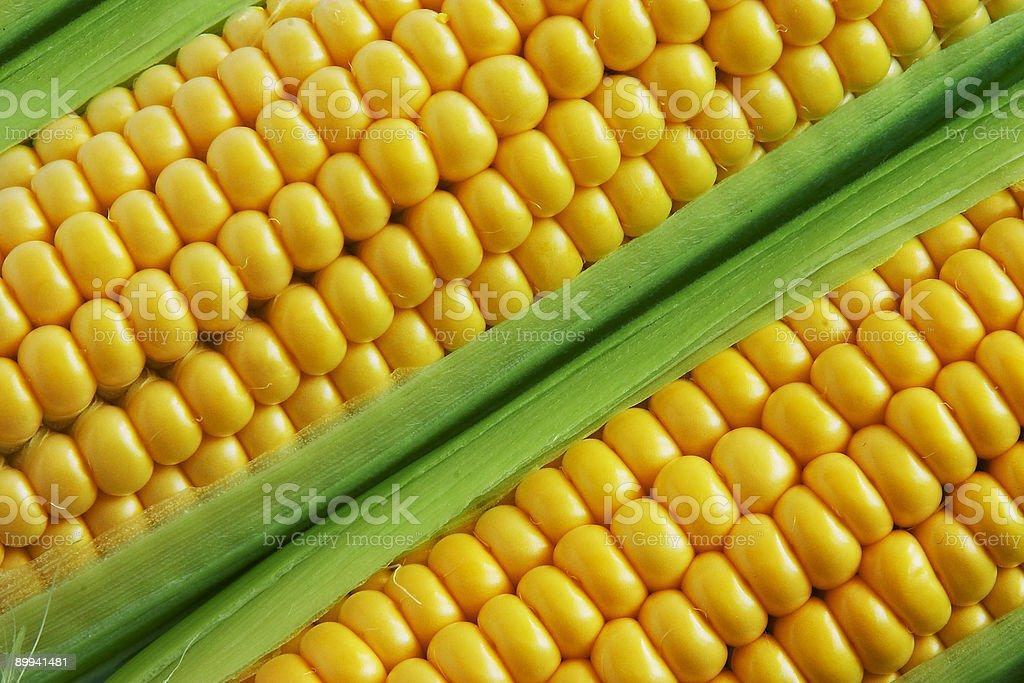 Corn on cob royalty-free stock photo