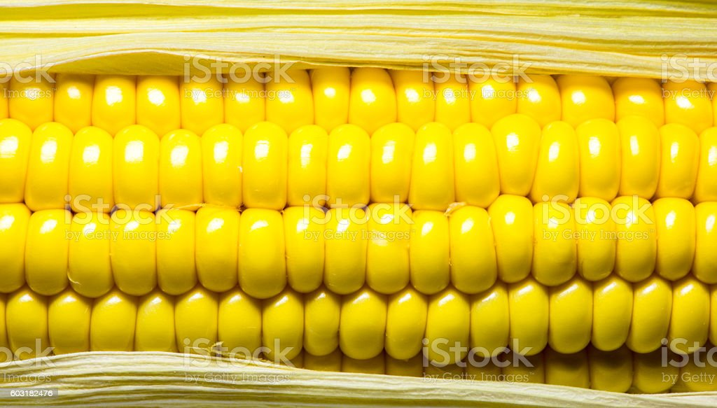 Corn on the cob close up stock photo