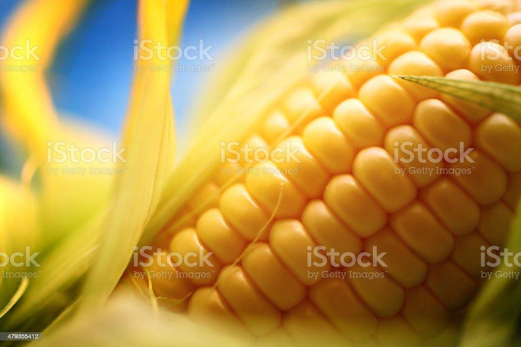 Corn on the cob, closeup. stock photo