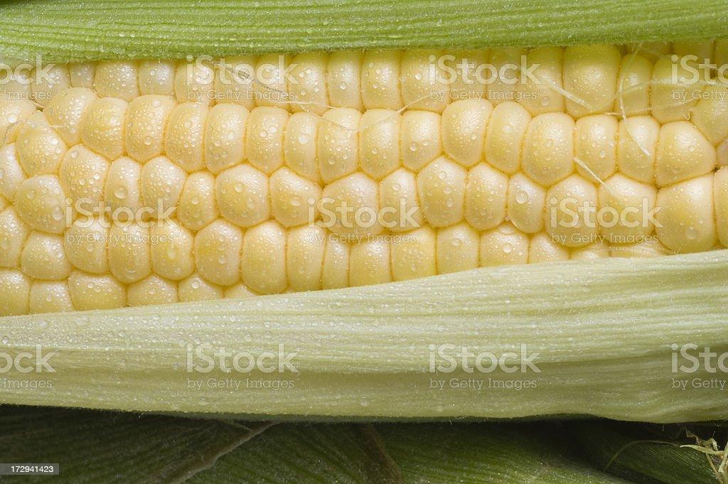 Corn on the Cob Horizontal Across Husk Light Dew CU stock photo
