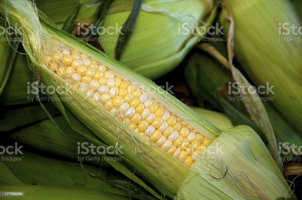 Mazorca de maíz foto de stock libre de derechos