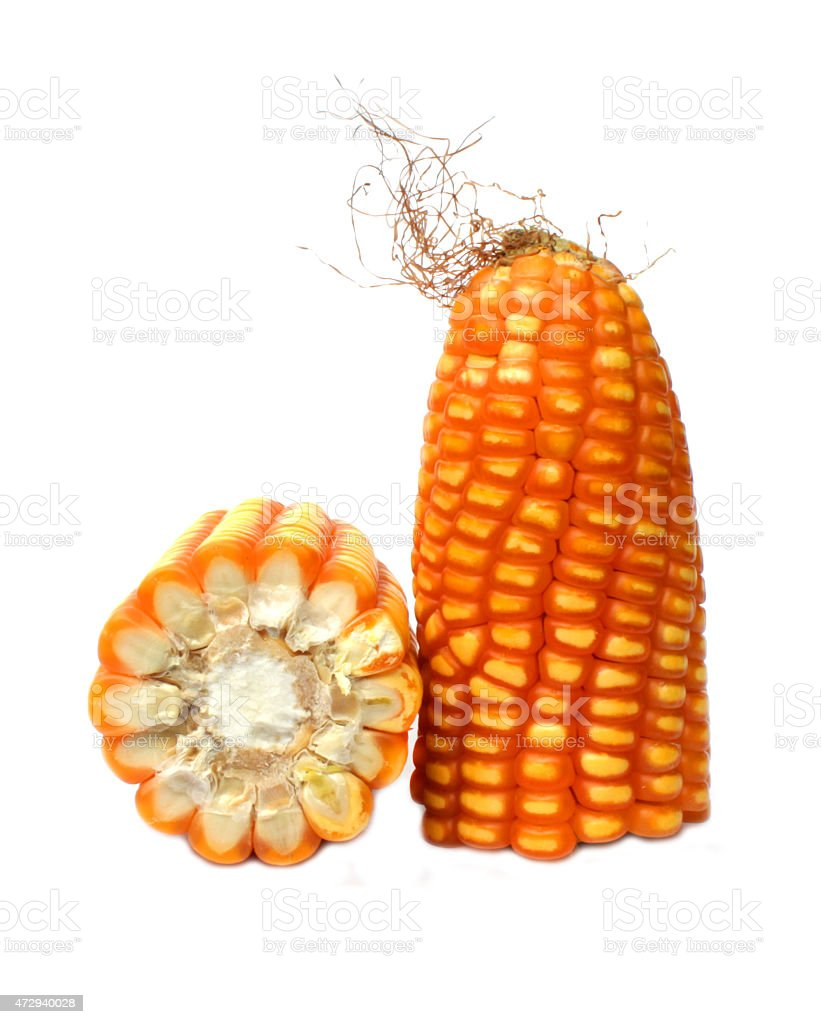 Épi de maïs photo libre de droits