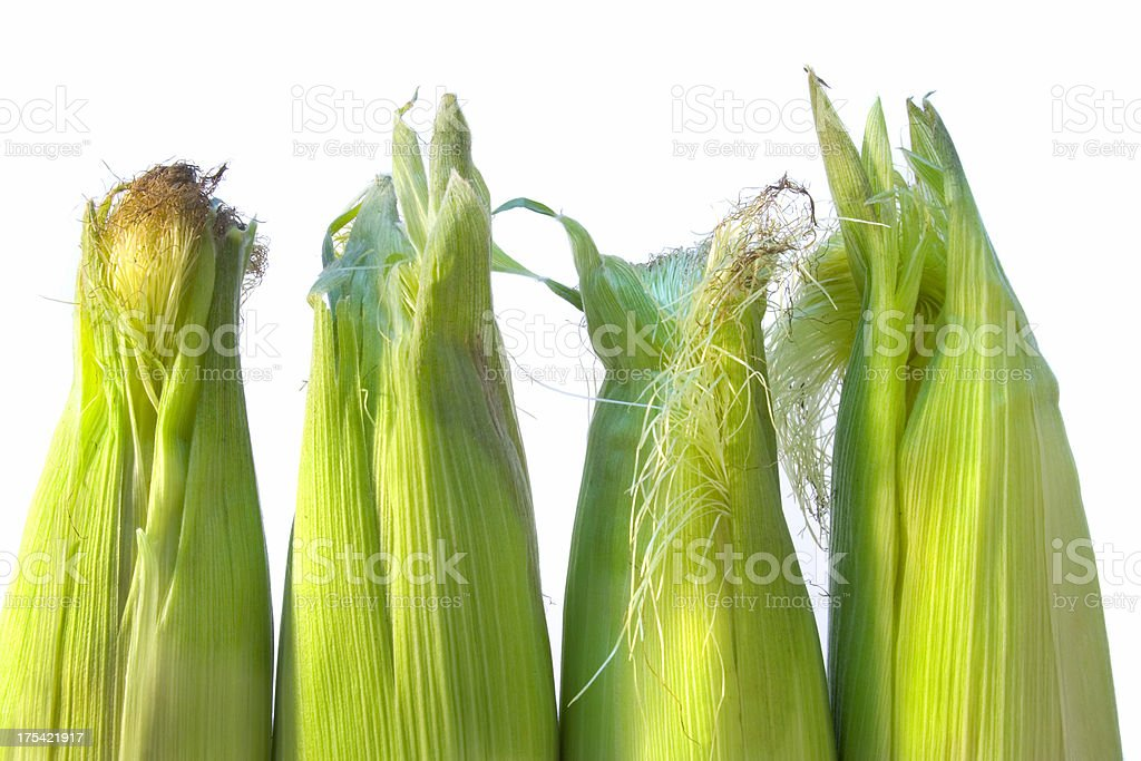 Corn on the Cob with White background royalty-free stock photo