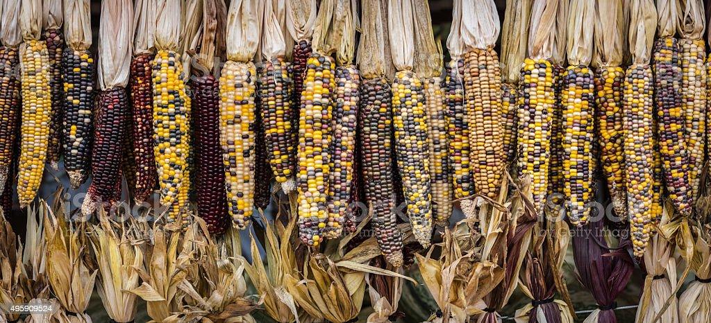 Corn Pano stock photo