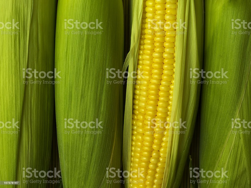 A corn peeled revealing its yellow cob royalty-free stock photo