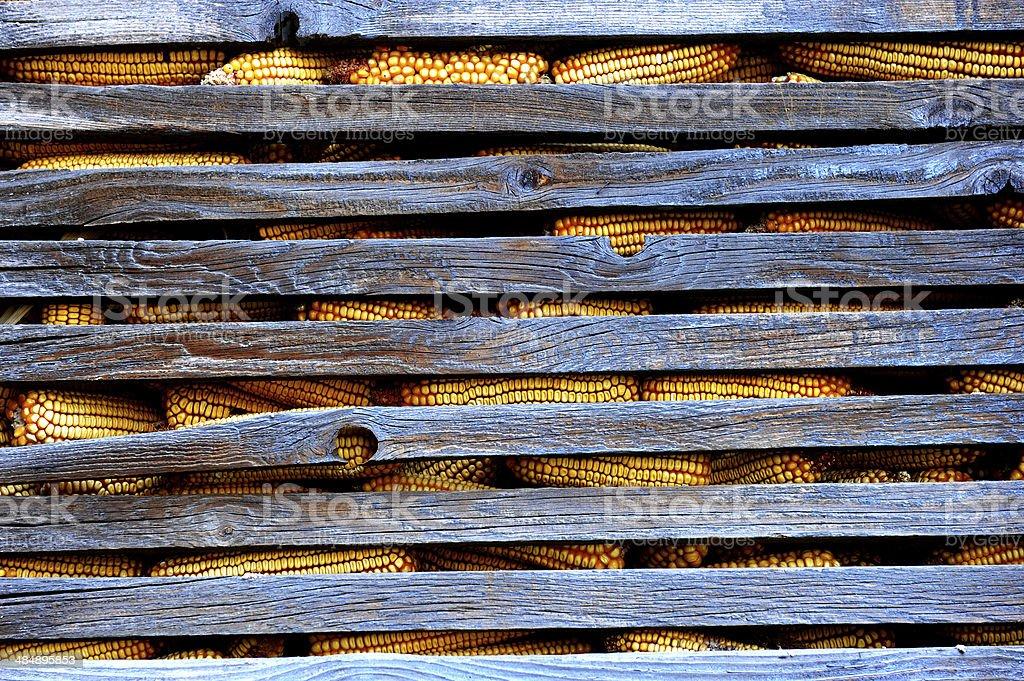 옥수수 royalty-free 스톡 사진