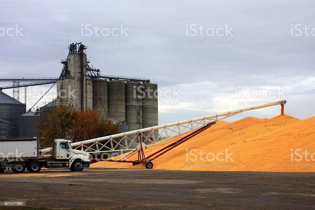 Corn Pile and Semi-Truck at Iowa Grain Elevator stock photo