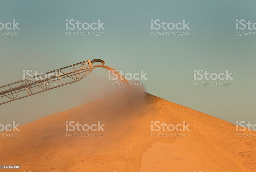 Corn Pile In The Midwest stock photo