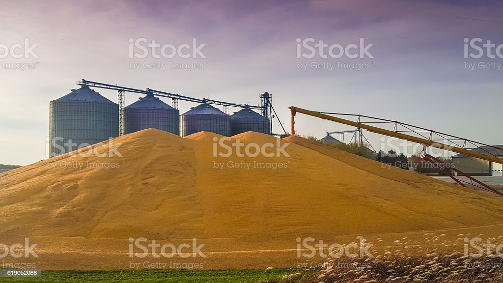 Corn Pile Rises by Grain Bins in Western Iowa stock photo