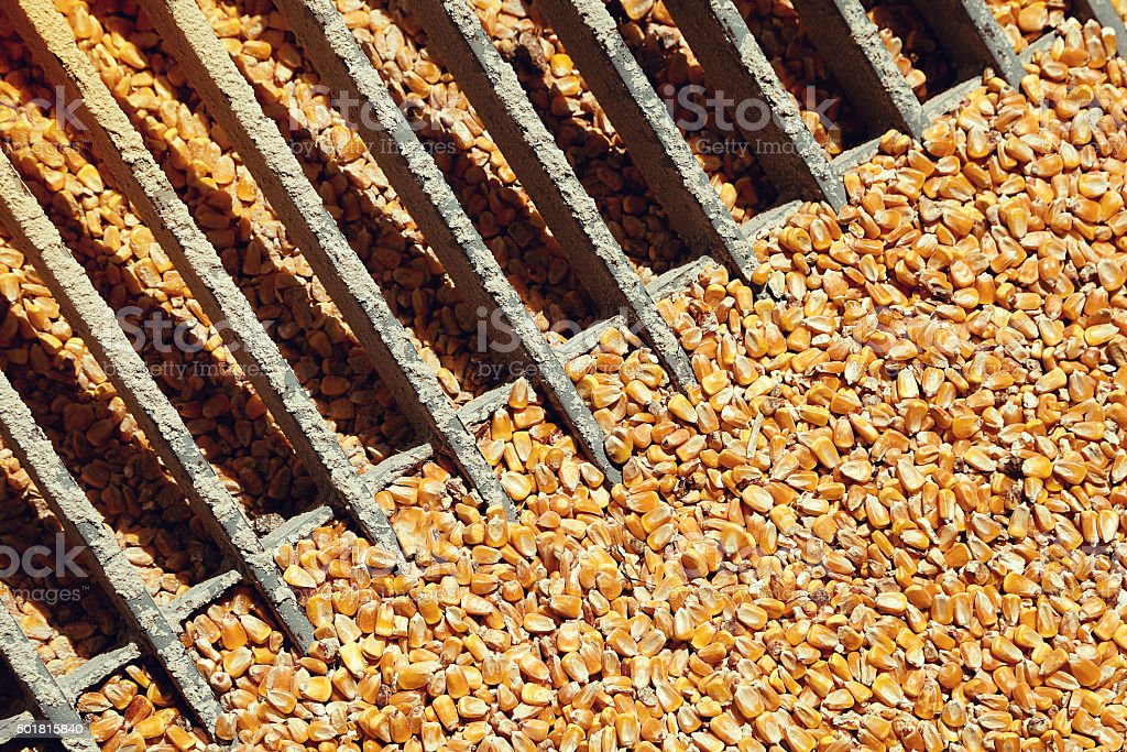 Corn processing factory stock photo