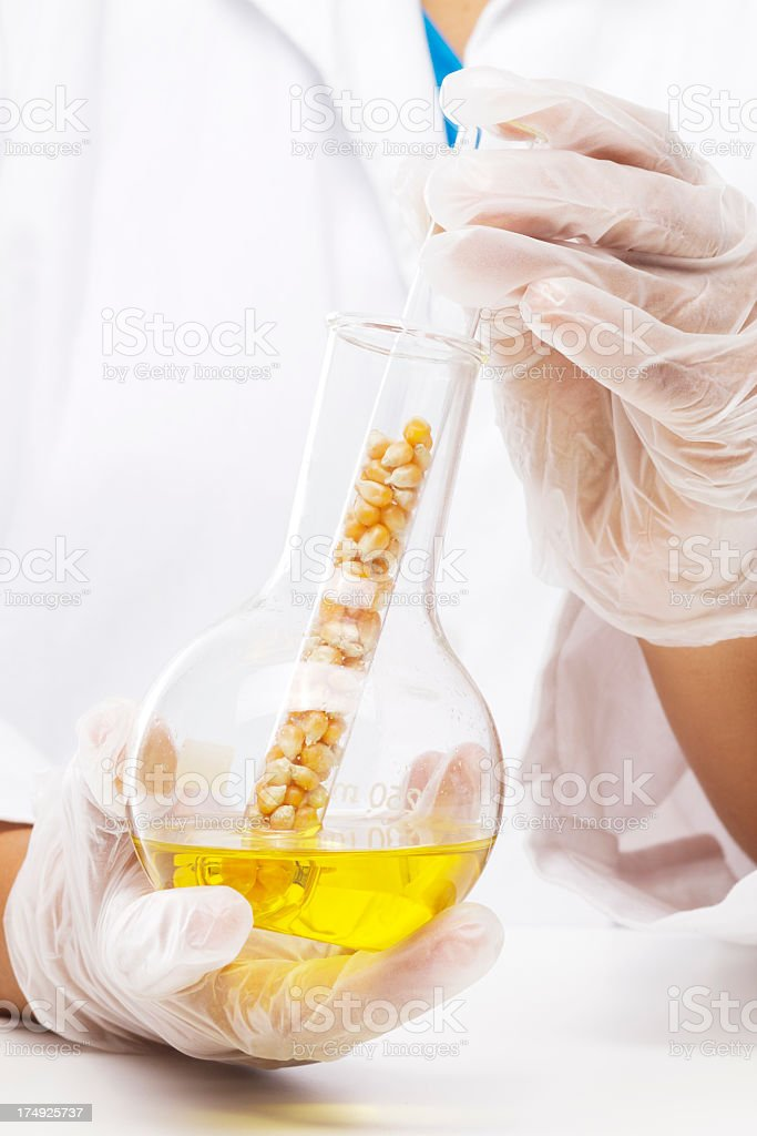 Corn research - bio fuel or high fructose corn syrup, HFCS stock photo