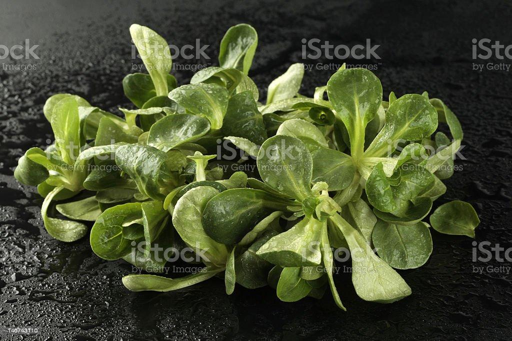 Corn salad (lettuce) on black background royalty-free stock photo