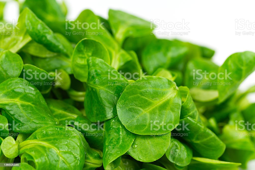 Corn Salad on the white Background royalty-free stock photo