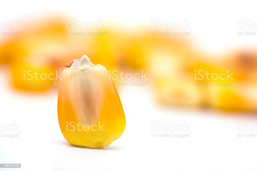 corn seed royalty-free stock photo