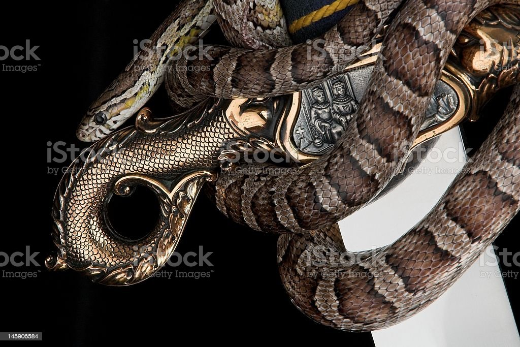 Corn Snake on Sword royalty-free stock photo