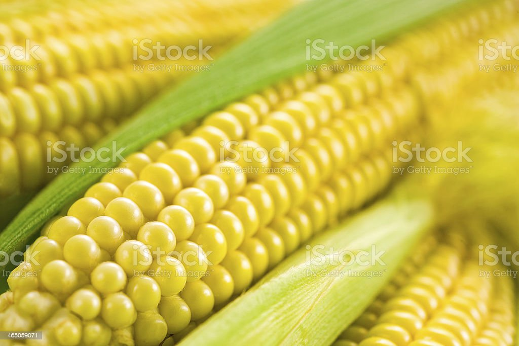 Corn. Soft focus stock photo