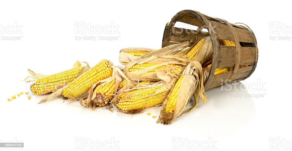 Corn Spills Out of a Rustic Basket stock photo