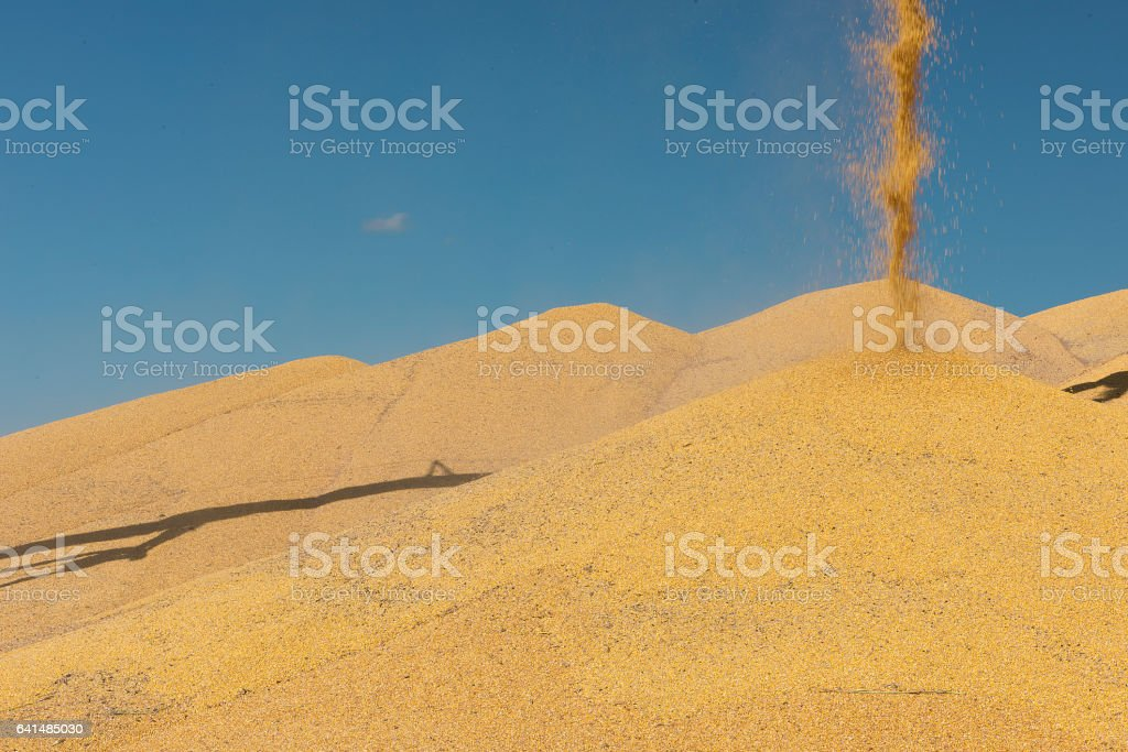 Corn Stacks stock photo