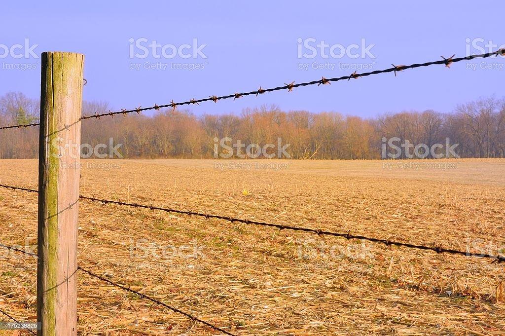 Corn Stubble At Dusk royalty-free stock photo