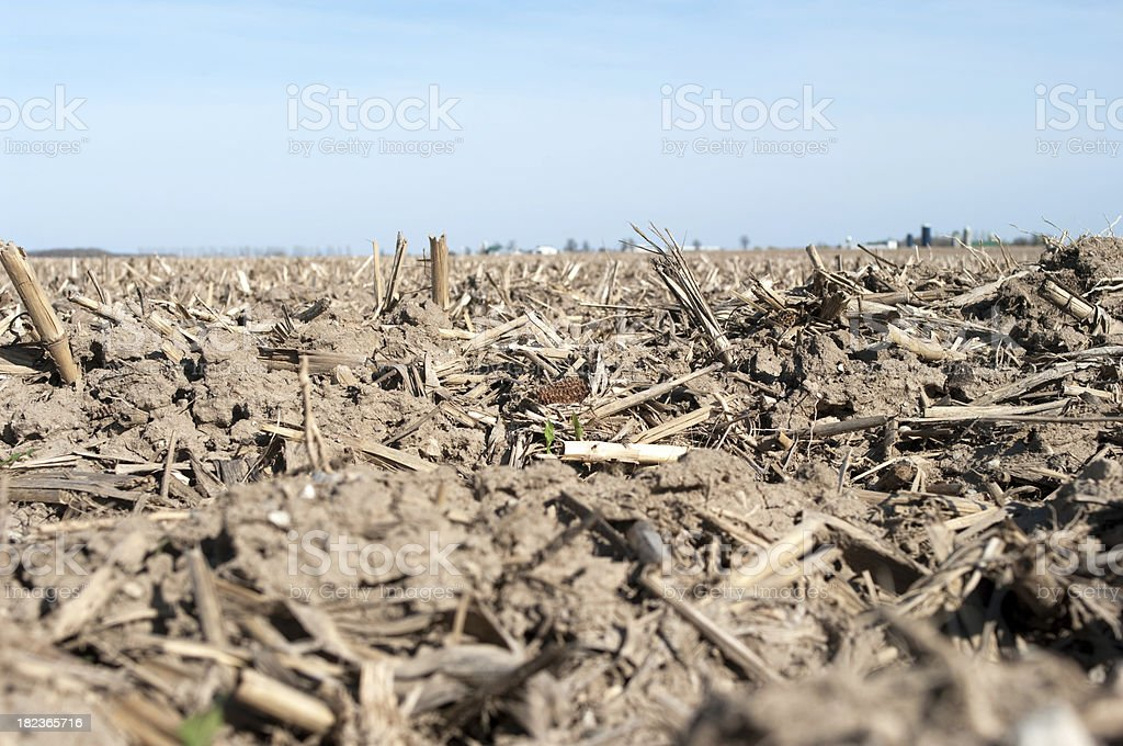 Corn Stubble in Spring royalty-free stock photo