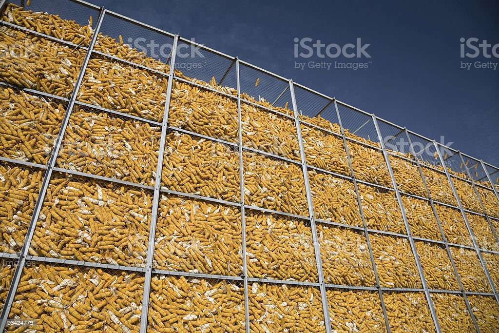 Corn Wall II royalty-free stock photo