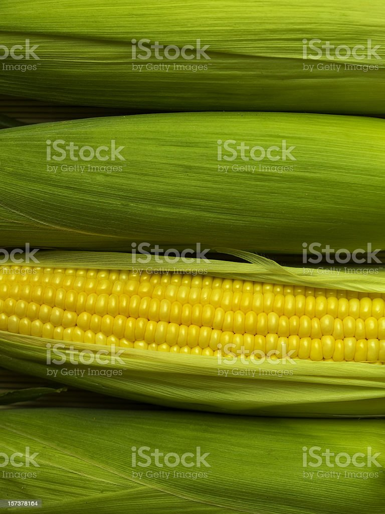 A corn with the husk leaves removed to reveal the grains stock photo